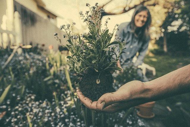 Havearbejde er populært blandt unge